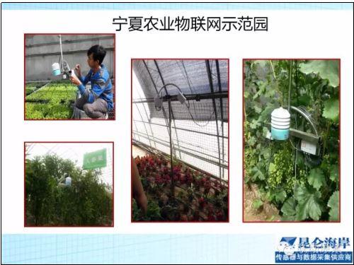 昆仑海岸 传感器 物联网 农业