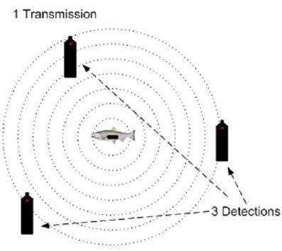 Vemco VPS鱼类跟踪定位系统